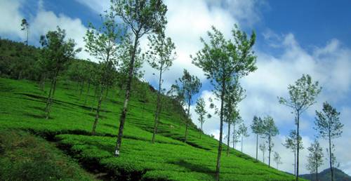 Honeymoon to Munnar